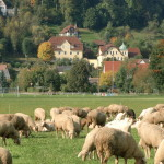 Blick auf die Häuser des St. Johannis-Konvent