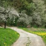 Weg oberhalb von Eschenbach