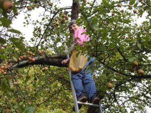 Schwester bei der Apfelernte