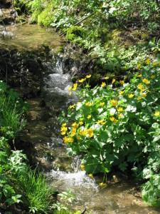 Blumen am Wasser