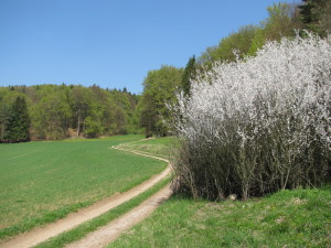 Frühling -Weg auf der Hochfläche